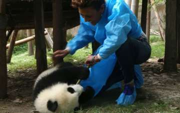ABC's openly gay anchor Robin Roberts spends some time with Pandas in China's Chengdu Research Base