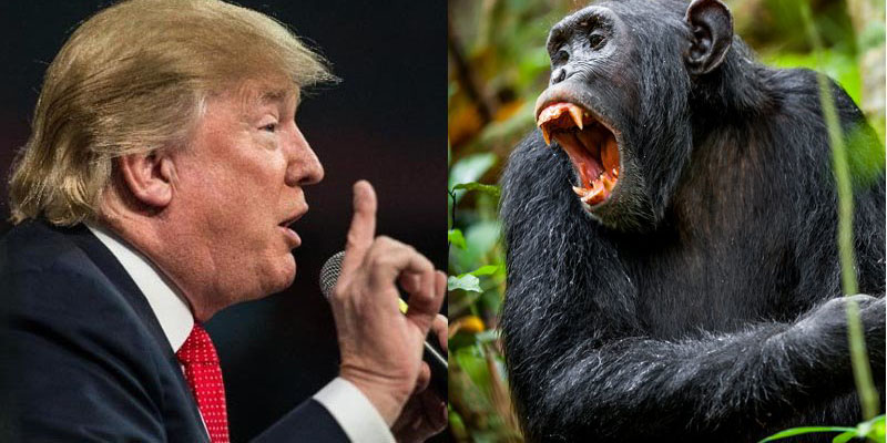 Famed anthropologist Jane Goodall compares Donald Trump's acts to male chimpanzees' behavior