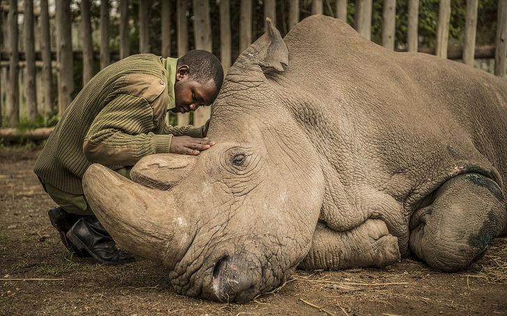 World's Last Male Northern White Rhino Dies Leaving Two Females to Be Saved From Extinction