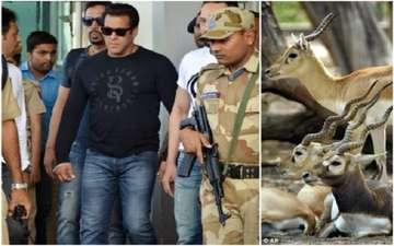 Bollywood Star Salman Khan Sentenced to Jail for Killing Rare Antelopes: Guilty of Poaching