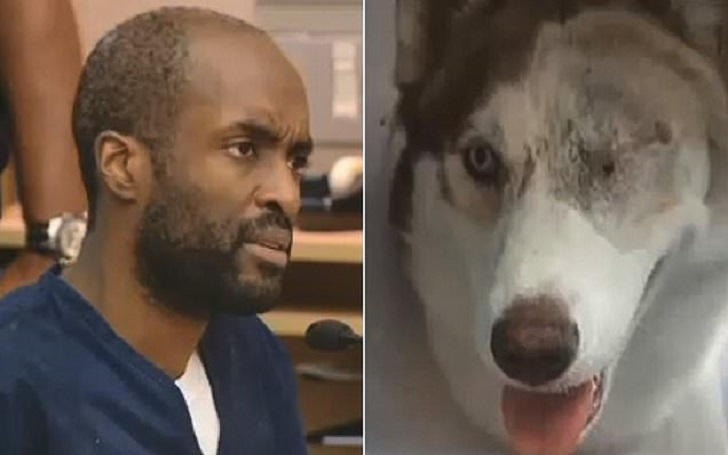 California Man Gets 9 Years in Prison for Physically Abusing Neighbors' Dogs