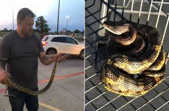 A Rat Snake Discovered in a Shopping Carts at Walmart in Texas